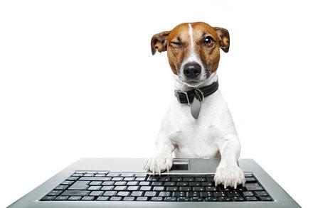 il-mondo-pet-online