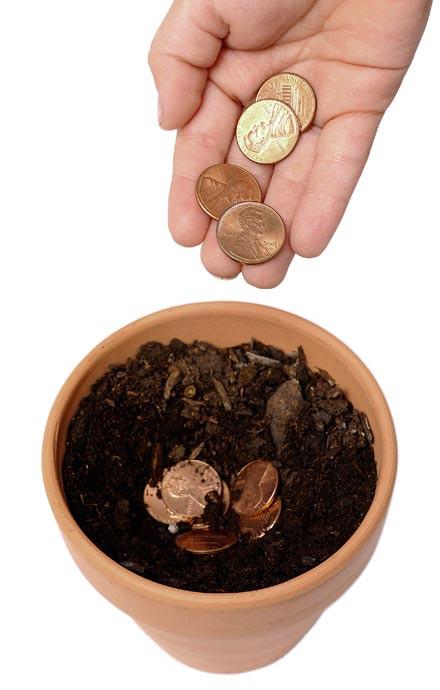 le-5-monete-doro-di-pinocchio