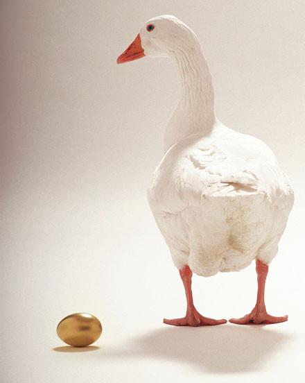 lagenzia-dalle-uova-doro